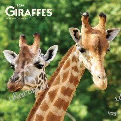 Giraffes 2020 Square Wall Calendar Żyrafy