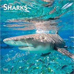Sharks 2020 Square Wall Calendar rekiny