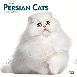 Persian Cats 2020 Square Wall Calendar koty perskie
