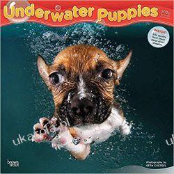 Underwater Puppies 2020 Square Wall Calendar szczeniaki pod wodą Książki i Komiksy