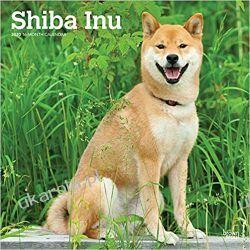 Shiba Inu 2020 Square Wall Calendar Książki i Komiksy