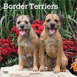Border Terriers 2020 Square Wall Calendar