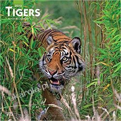 Tigers 2020 Square Wall Calendar tygrysy Książki i Komiksy
