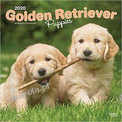 Golden Retriever Puppies 2020 Square Wall Calendar