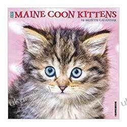 Maine Coon Kittens 2020 Calendar koty Fotografowanie krajobrazów, przyrody