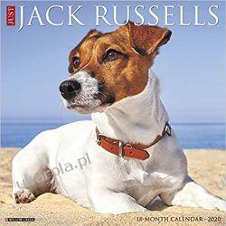 Just Jack Russells 2020 Wall Calendar Zagraniczne