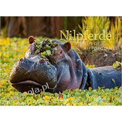 Kalendarz Hipopotamy Hippos Calendar Nilpferde 2020
