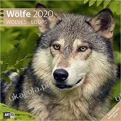 Kalendarz Wilki Wolves 2020 Calendar Piłka nożna