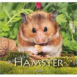 Kalendarz Hamster 2020 Calendar Chomiki  Seriale