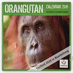 Kalendarz Orangutan 2020 Calendar