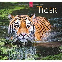 Kalendarz Tygrysy Tiger 2020 Calendar Samochody