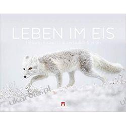 Kalendarz Zwierzęta Polarne Life in the ice - animals at the polar circle 2020 Calendar