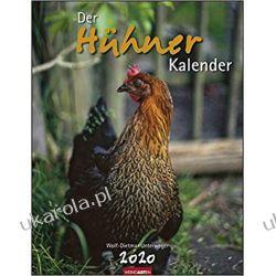 Kalendarz Hens Calendar Kury 2020 Pozostałe