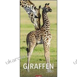 Kalendarz Żyrafy 2020 Giraffes Calendar