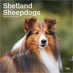 Kalendarz Owczarek Szetlandzki Shetland Sheepdogs 2020 Square Wall Calendar