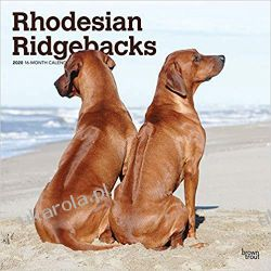 Kalendarz Rhodesian Ridgebacks 2020 Square Wall Calendar