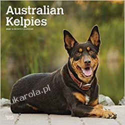 Kalendarz Australian Kelpies 2020 Square Wall Calendar Biografie, wspomnienia