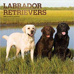 Kalendarz Labrador Retrievers 2020 Square Wall Calendar