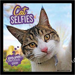 Kalendarz Cat Selfies 2020 Square Wall Calendar