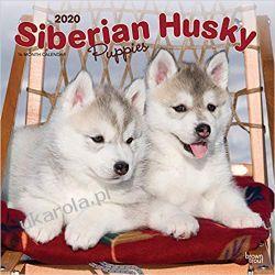 Kalendarz Siberian Husky Puppies 2020 Square Wall Calendar