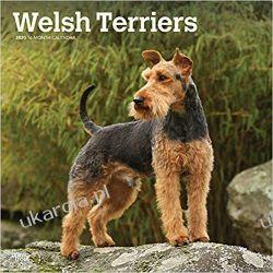 Kalendarz Terier walijski Welsh Terriers 2020 Square Wall Calendar