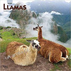 Kalendarz Lamy Llamas 2020 Square Wall Calendar