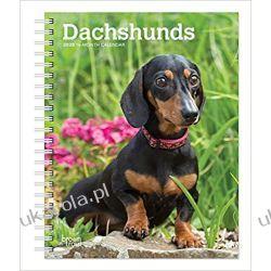 Kalendarz książkowy Jamnik Dachshunds 2020 Diary