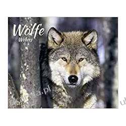 Kalendarz Wolves Calendar 2020 Wilki