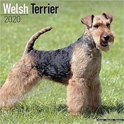 Kalendarz Welsh Terrier Calendar 2020 Marynarka Wojenna