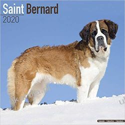 Kalendarz Saint Bernard Calendar 2020 Bernardyny Pozostałe