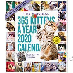 Kalendarz Kocięta 365 Kittens-A-Year Picture-A-Day Wall Calendar 2020 Książki i Komiksy