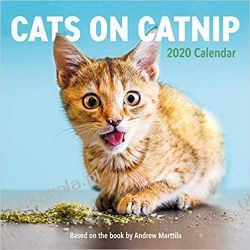 Kalendarz Koty Cats on Catnip Wall Calendar 2020 Książki i Komiksy