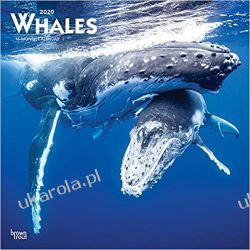 Kalendarz Wieloryby Whales 2020 Square Wall Calendar  Lotnictwo