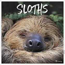 Kalendarz Leniwce Sloths 2020 Calendar Pozostałe