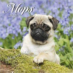 Kalendarz Mops 2020 Pugs Calendar