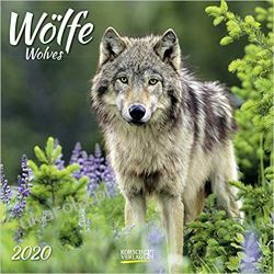 Kalendarz Wilki Wolves 2020 Calendar Historia