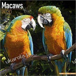 Kalendarz Macaws Calendar 2020 Ary Marynarka Wojenna