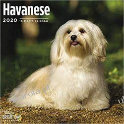 Kalendarz Havanese Wall Calendar 2020 Hawańczyk