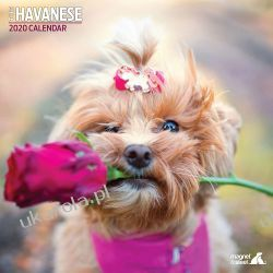 Kalendarz Hawańczyki Havanese Traditional 2020 Calendar