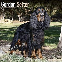 Kalendarz Gordon Setter Calendar 2020 Pozostałe