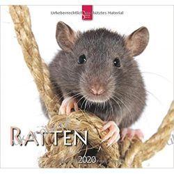 Kalendarz Szczury Rats 2020 Calendar Gadżety i akcesoria