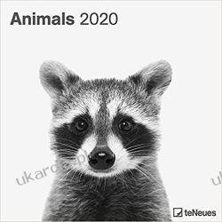 Kalendarz Zwierzęta Animals 2020 Square Wall Calendar