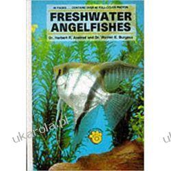 Freshwater Angelfish Zwierzęta domowe i hodowlane