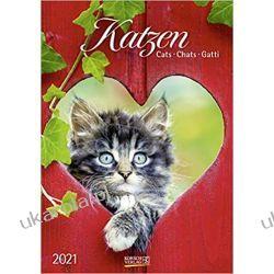 Kalendarz Koty Cats 2021 Calendar Książki i Komiksy