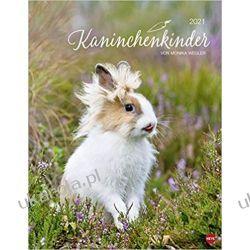 Kalendarz Króliki Rabbit children 2021 Calendar Książki i Komiksy
