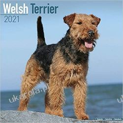 Welsh Terrier 2021 Calendar