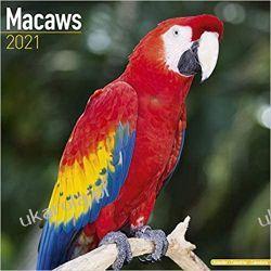 Macaws 2021 Calendar papugi Książki i Komiksy