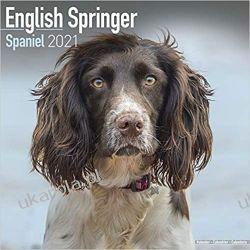 Kalendarz Eng Springer Spaniel 2021 Calendar Kalendarze ścienne
