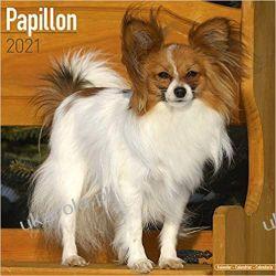 Kalendarz Papillon 2021 Calendar