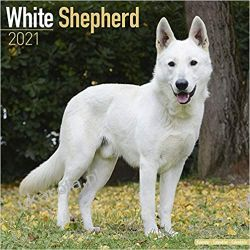 Kaledarz Owczarek Szwajcarski White Shepherd 2021 Calendar